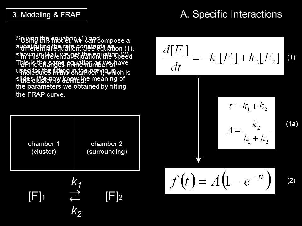 [F]1 ← → k1 k2 [F]2 A. Specific Interactions 3. Modeling & FRAP